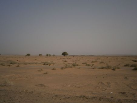 Deserta and some trees