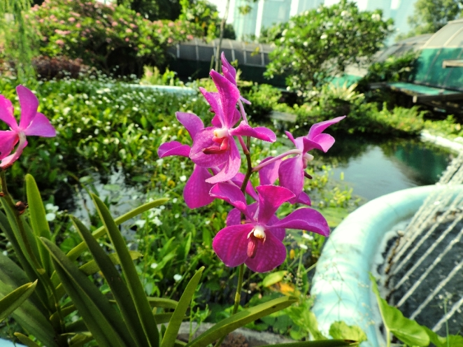 5. orhideq