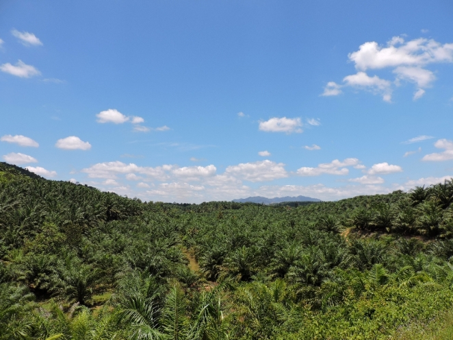 Palm oil do kudeto pogled stiga