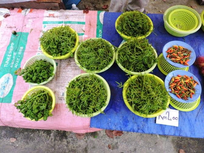 paprati-i-zelenilki