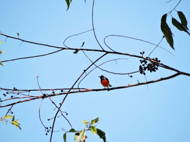 ptichence-kelimutu