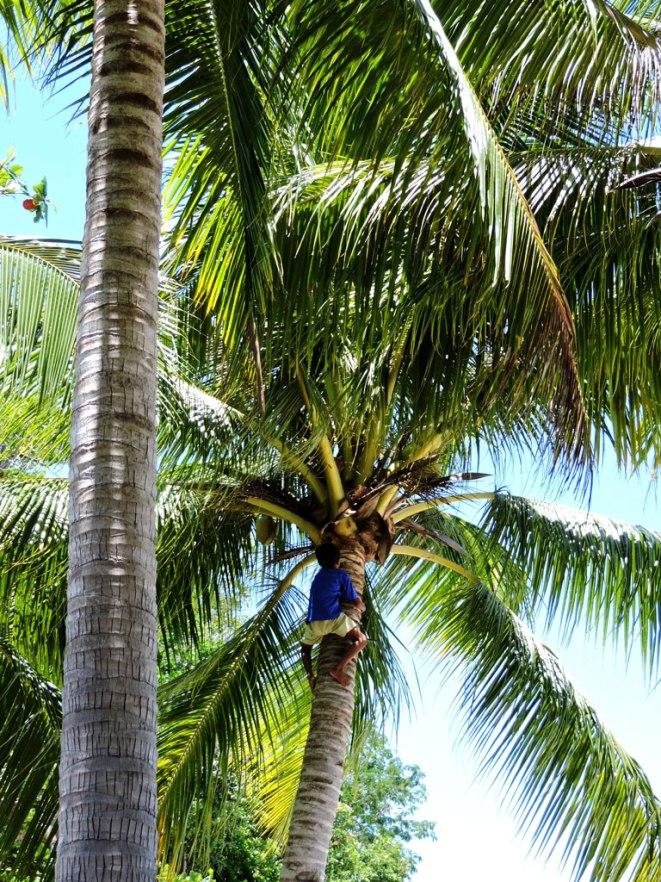 svalqne-na-kokosi