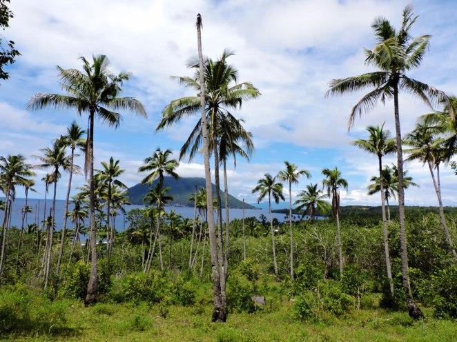 kokosi-i-vulkani