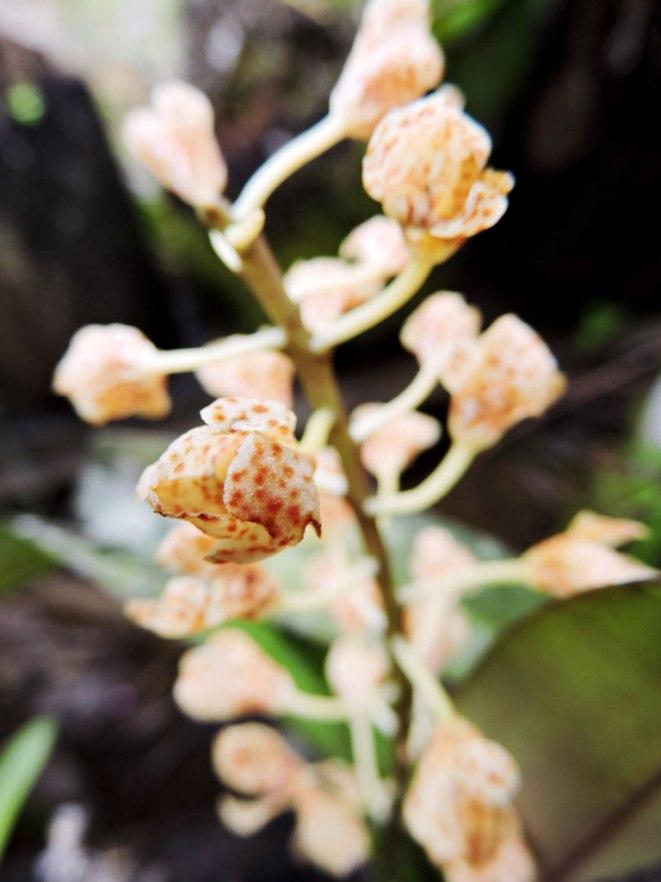 orhideq
